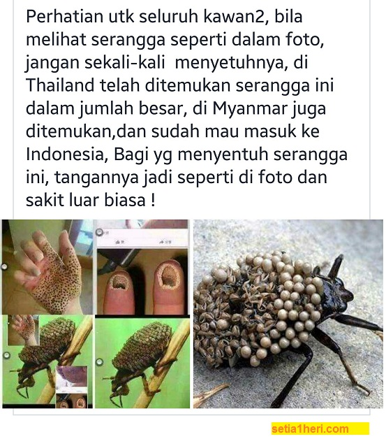 berita hoax serangga dari thailand